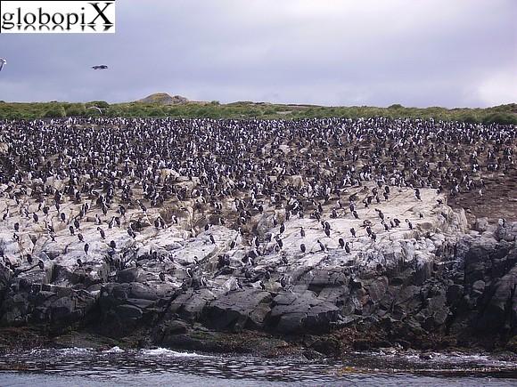 visitare la patagonia canale di beagle