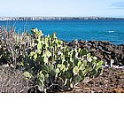 Foto: Isole Galapagos