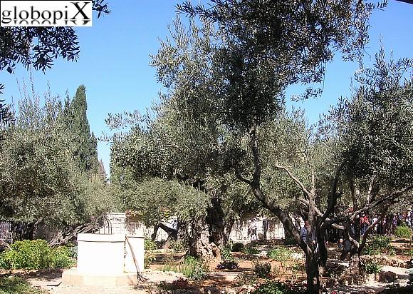 Orto degli Ulivi - Getsemani
