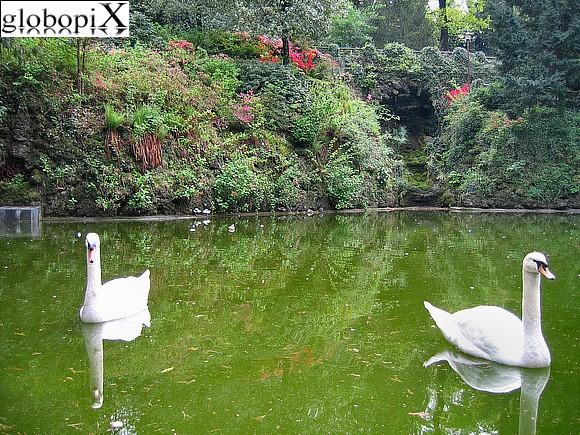 Foto varese cigni nel laghetto dei giardini estensi for Laghetto i giardini