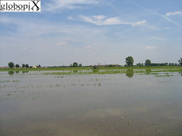 Pavia - Rice paddies in the Pavian countryside.