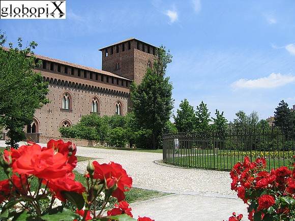 Pavia - Rose garden in Castello Visconteo's garden