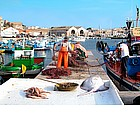 Photo: Fishing in Favignana