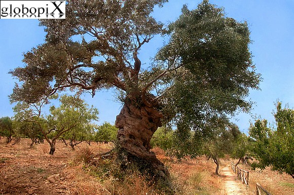 Agrigento - Surroundings of the archaeological site