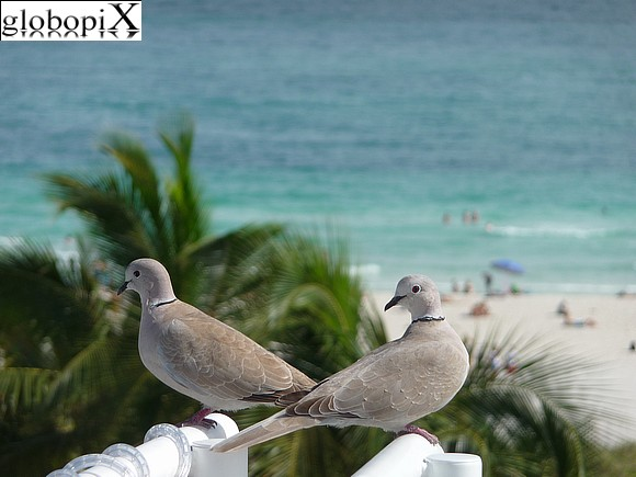 Miami Beach - Birds in South Beach