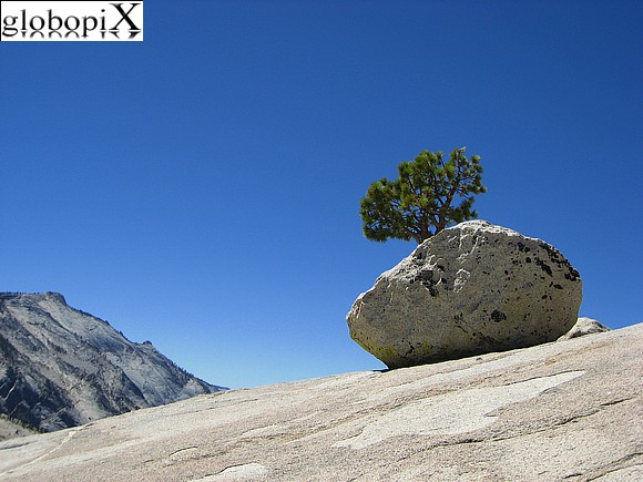 Yosemite - Olmsted Point