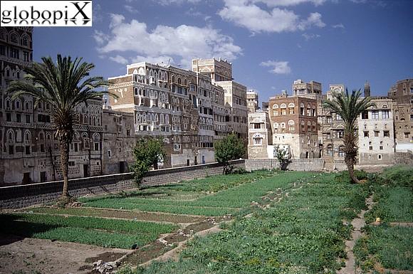 Foto di Sana'a